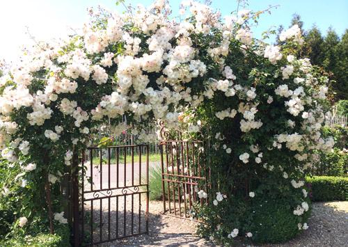 Rosegarden FilRoses