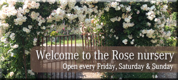 FilRoses Rose nursery