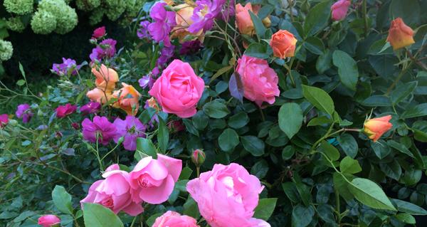 Floraisons Automne