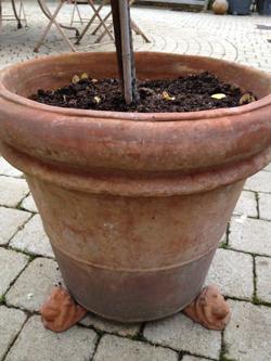 Pots-hiver